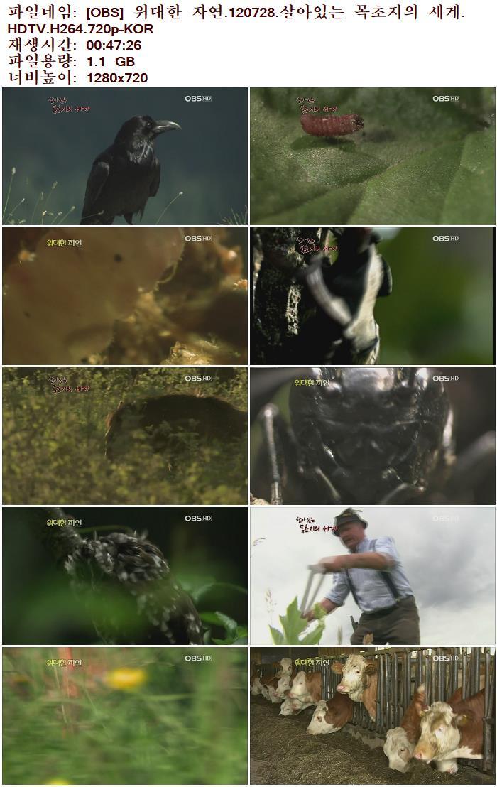 [OBS] 위대한 자연.120728.살아있는 목초지의 세계.HDTV.H264.720p-KOR